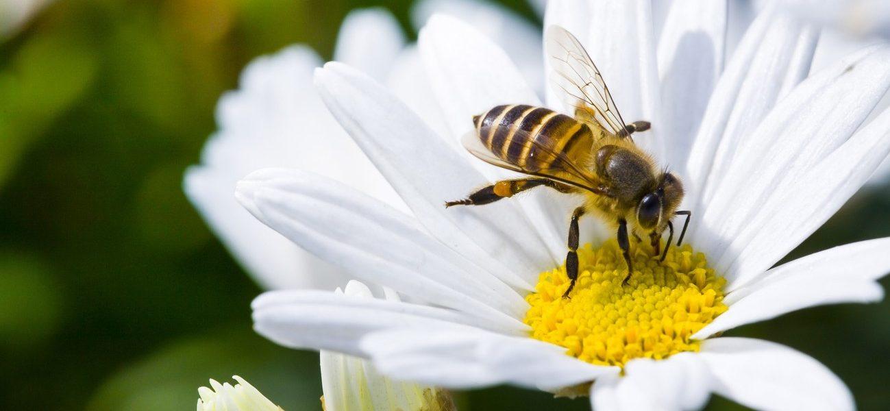 Colmeias inteligentes já apoiam apicultores portugueses