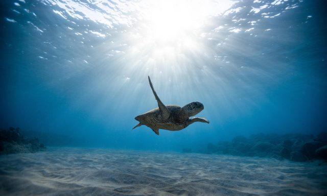 Ubiwhere desenvolve tecnologia para ajudar a limpar os oceanos